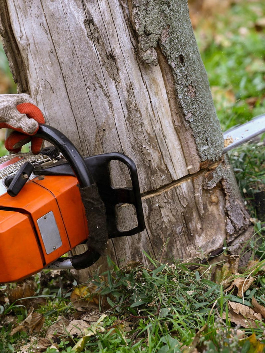 We're the right tree service for the job